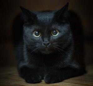 Черный кот присядет у камина