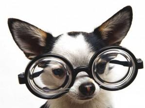 Экспериментальный-пес-Пава