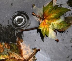 Просто-запах-растоптанных-листьев-несносен