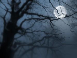 В лунном тумане