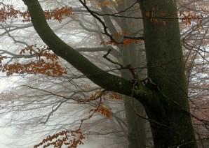 Осенний мальчик, в ожидании вьюг